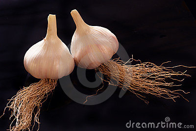 Fresh young garlic
