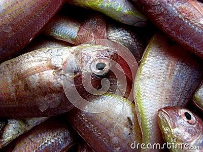 Freshest Fish