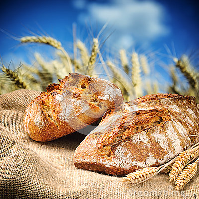 Freshly baked traditional bread with wheat field on background