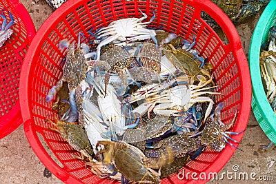 Freshly caught blue crabs, Vietnam