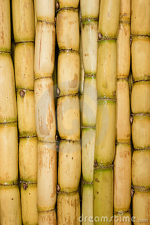 Freshly Cut Sugar Cane