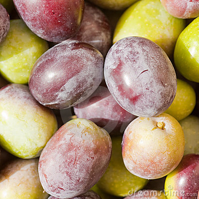 Freshly Harvested Olives Background