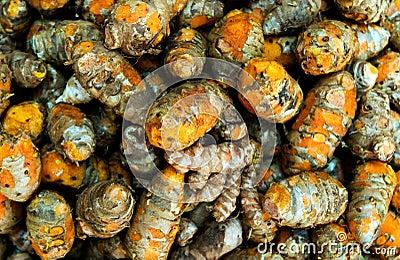 Freshly harvested turmeric from Kerala