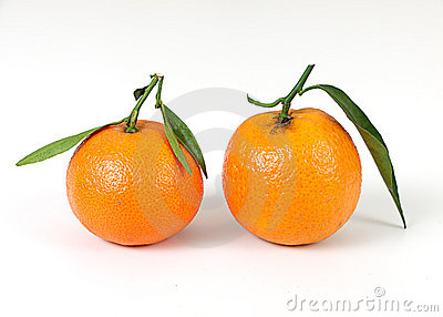 Freshly picked clementine oranges