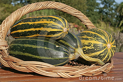 Freshly picked marrows