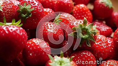 Freshly picked strawberries stock video footage