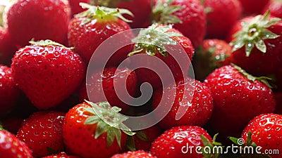 Freshly picked strawberries stock footage