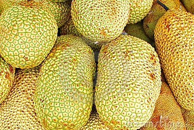 Freshly picked tropical jackfruits