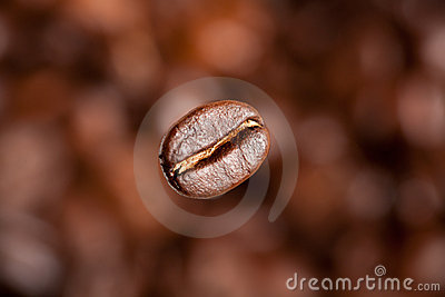 Freshly roasted coffee bean