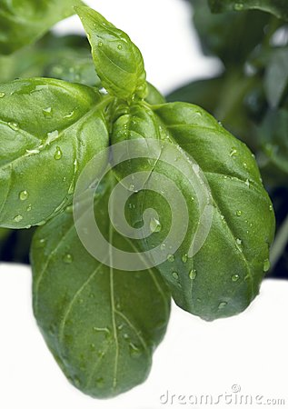 Freshness Royalty Free Stock Image - Image: 16969216
