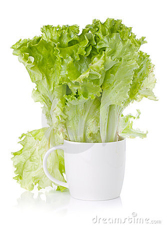 Freshness green lettuce salad in cup