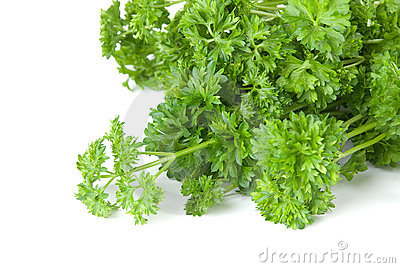 Freshness green parsley