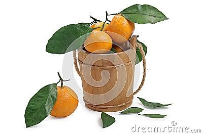 Freshness tangerine