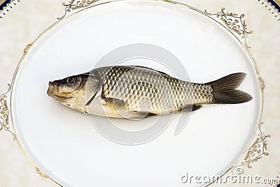 Freshwater carp