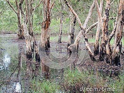 Freshwater Swamp Forest Stock Photo - Image: 55919306