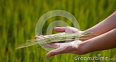 Föreslå för gest som är symboliskt