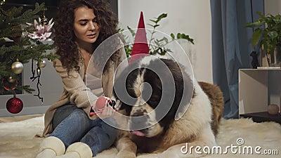 Freundliche, kaukasische Brunette-Frau, die New Year-Dekoration zu großen Saint Bernard Hunde sitzen mit Menschen auf weich stock footage