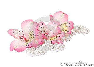 Frezja z perłą