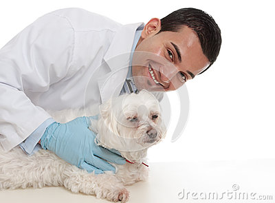 Friendly caring vet with a sick animal