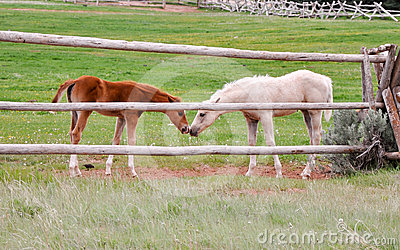 Friendly foals