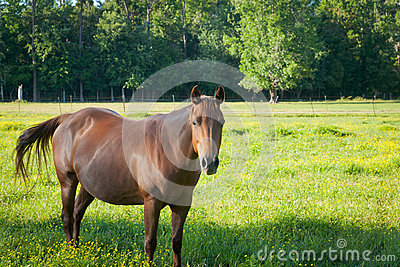 Friendly Mare in a Field