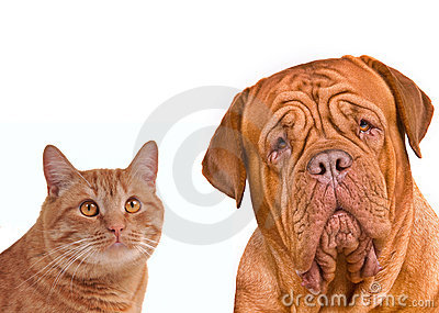 Friends. Close-up portrait of brown cat and dog