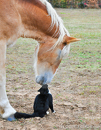 Friends nose to nose