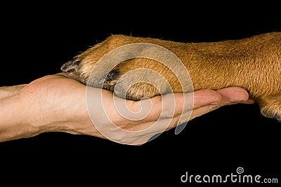 Friendship Human vs Dog