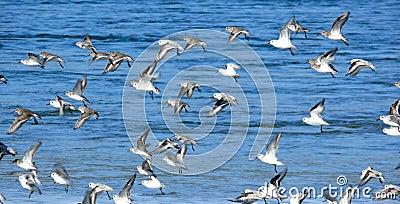 Frightened Flock of birds