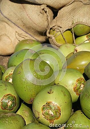 Frische grüne Kokosnüsse