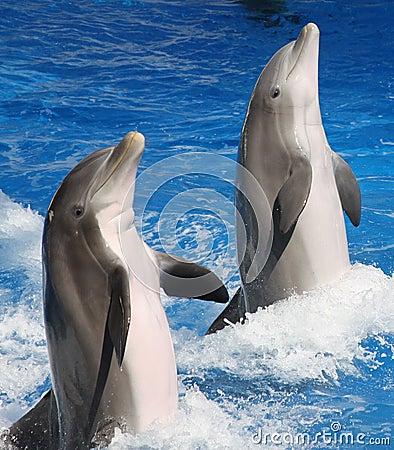 Frisky Dolphins