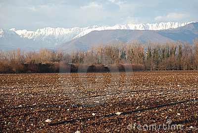 Friuli Winter Field