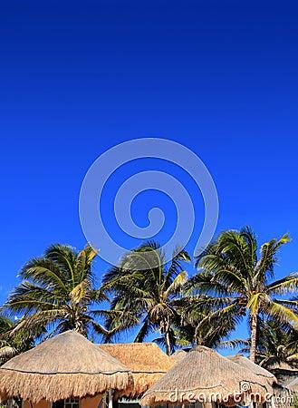Förlägga i barack den blåa skyen för kokosnötpalmträdet palapasuntaket