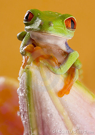 Free Frog Stock Photography - 1891152