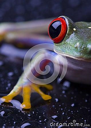 Free Frog Royalty Free Stock Photos - 2103618