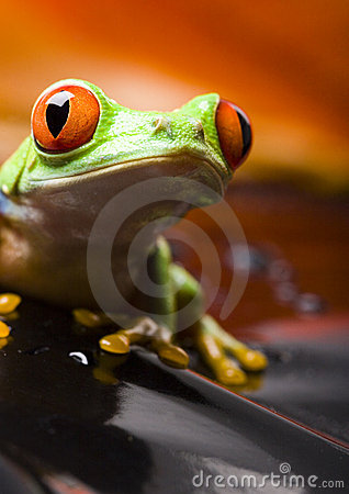 Free Frog Royalty Free Stock Images - 2103729