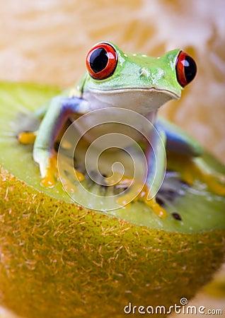 Free Frog Stock Photo - 2168730