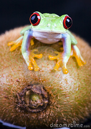 Free Frog Royalty Free Stock Photos - 2168788