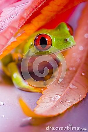 Free Frog Royalty Free Stock Photos - 2316578