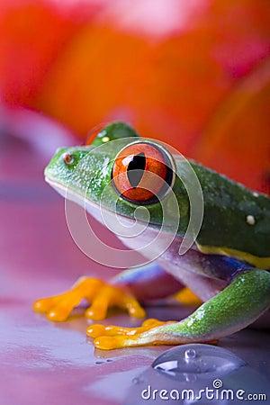 Free Frog Stock Photo - 2316620