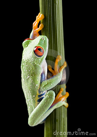 Free Frog Stock Photography - 2395782