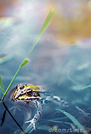 Free Frog Royalty Free Stock Photography - 340247