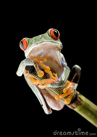 Free Frog Royalty Free Stock Images - 3954949