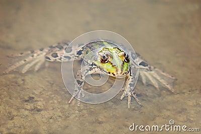 Frog in the algae