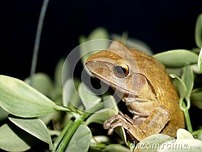 Frog  , amphibian 1