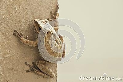 Frog animal life