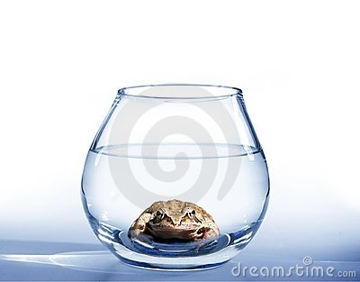 Frog in aquarium