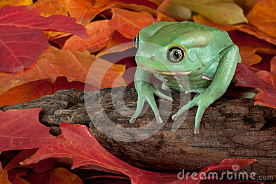 Frog in autumn
