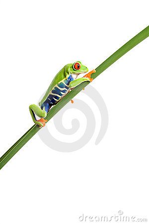 Frog climbing up leaf