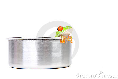 Frog on cooking pot